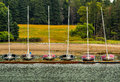 Racing Sailboats with Numbers, Docked Royalty Free Stock Photo