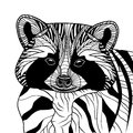 Racoon or coon head animal illustration for t shirt sketch tattoo design Stock Images
