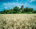 Racton ruin an old english landmark surround by golden wheat fields Royalty Free Stock Photo