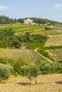 Radda in Chianti - Ancient palace and vineyards Royalty Free Stock Photo