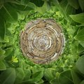 Circular Rock and Green Shrub Pattern Royalty Free Stock Photo