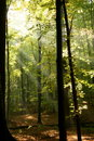 Radiant woods Royalty Free Stock Photo