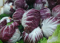 Radicchio cichorium intybus c italian chicory a cultivar with red compact leaves with white veins forming cabbage like head used Stock Photos