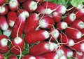 Radish a bunch of at a farmer s market selective focus at the center Stock Photo