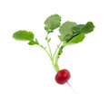 Radish in front of white background Royalty Free Stock Photography