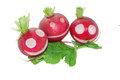Radish for fun snack macro Royalty Free Stock Photo