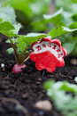 Radish garden marker a red identifying a growing in the background Royalty Free Stock Photo