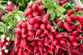 Radish pile of red for display at market Royalty Free Stock Photography