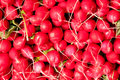Radish pile of red for display at market Stock Photo
