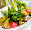 Radish salad leaves and herbs Royalty Free Stock Photography