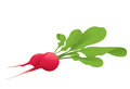Radish two with leaves on a white background Stock Photos