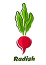 Radish vegetable with lush haulm fresh in cartoon style bright pink round root sappy haulms isolated on white background for Stock Photo
