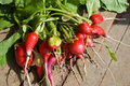 Radishes Stock Images