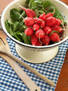 Radishes in a colander Royalty Free Stock Photo