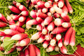 Radishes on display at the farmer's market Royalty Free Stock Photo