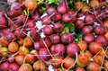 Radishes at the farm stand in Vermont Royalty Free Stock Photo