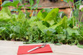Radishes and lettuce in raised bed Royalty Free Stock Photo