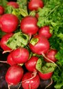 Radishes at a produce stand Royalty Free Stock Image