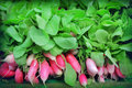 Radishes for sale at market Royalty Free Stock Photos