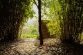 Ragged pavement in shady bamboo on sunny spring chengdu china Royalty Free Stock Photo