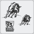 Raging bull. Vector emblems, labels and badges. Royalty Free Stock Photo