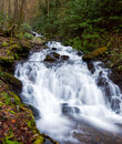 Raging stream in spring in Smokies Royalty Free Stock Photo