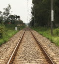 Rail track through the forest Stock Images