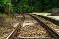 Rail way view of railway and trees Royalty Free Stock Photo