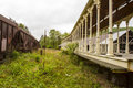 Railroad cars on overgrown tracks Royalty Free Stock Photo