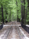 Railroad disappearing into the forrest Stock Image