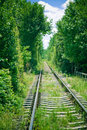 Railroad through forest Royalty Free Stock Photo