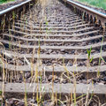 Railroad rails overgrown with grass blurred background Royalty Free Stock Photo