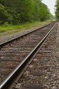 Railroad, train tracks in forest, toward horizon Stock Image