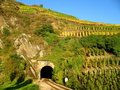 Railroad tunnel in a wine yard Stock Photos