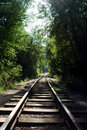 Rails in the forest Royalty Free Stock Photo