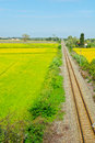 Railway line between the fields of piedmont italy Stock Images