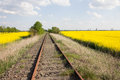 Railway tracks and yellow rape fields old unused in germany are framed by blooming Royalty Free Stock Image