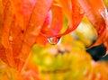 Rain drop Royalty Free Stock Photo
