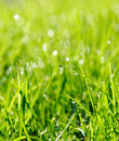 Rain drop on grass. Royalty Free Stock Photo