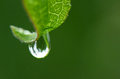 Rain drop on a leaf close up Royalty Free Stock Photos