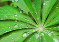 Rain droplets on a green leaf Royalty Free Stock Photo