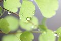Rain Drops on Fern Royalty Free Stock Photo