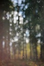 Rain drops. Bokeh. Royalty Free Stock Photo