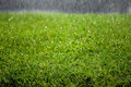 Rain Drops on Grass Royalty Free Stock Photo