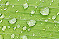 Rain drops on green leaf of iris close up Royalty Free Stock Photo
