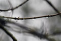 Rain drops hanging on the tree bough Stock Photos