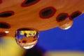 Rain Drops on a Tiger Lily Petal Royalty Free Stock Photo