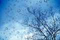Rain drops on a window and trees outside Royalty Free Stock Photo