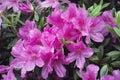 Rain flowers Royalty Free Stock Photo