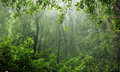 Rain-forest Royalty Free Stock Photo